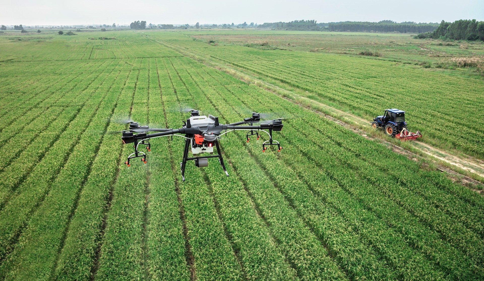 Nataïs utilise la reconnaissance d'image par drones pour détecter les mauvaises herbes dans ses champs de maïs